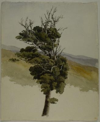 Painting; Tree
